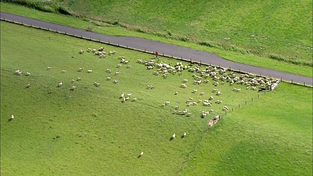 állattartó telep