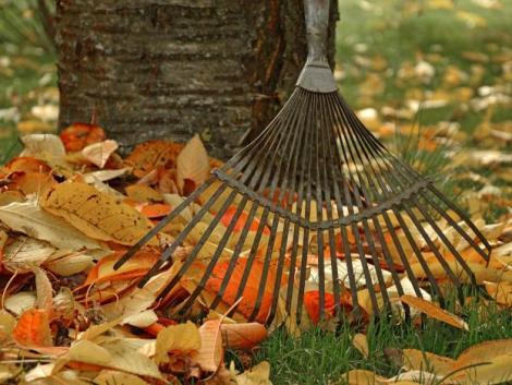 Szántsunk, ássunk, telepítsünk – a legfontosabb októberi teendők a kertben