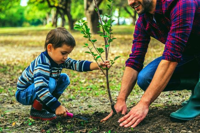 gyümölcsfa ültetése
