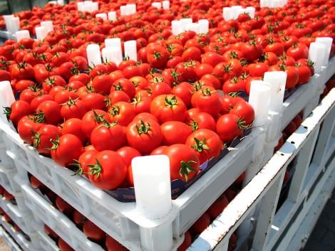 Trendforduló előtt áll a globális gyümölcs- és zöldségpiac