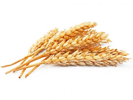 Cimbria magtisztító,- osztályozó gépek a minőségi élelmiszer hatékony előállítása érdekében