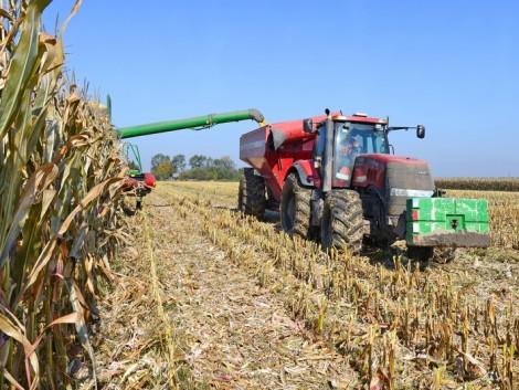Folyamatosan növekszik a génkezelt kukoricák európai vetésterülete