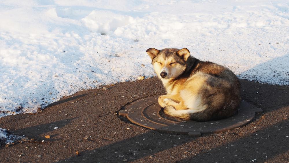 kutya-hideg