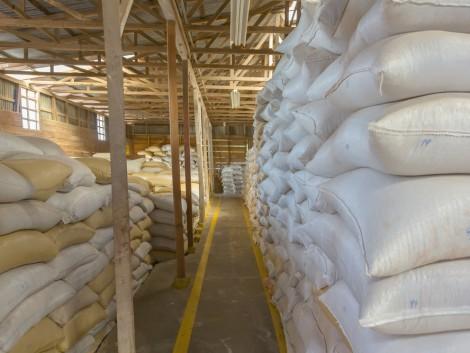 Az európai búzaexportőrök profitálhatnak az euró alacsony árfolyamából