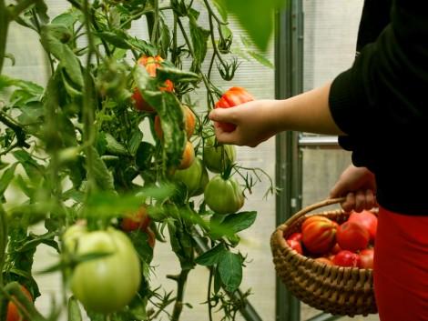Hajtatott zöldségre éhezik Oroszország