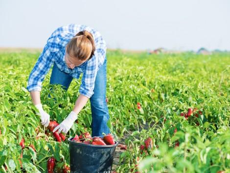 Egyre nagyobb költségekkel és csökkenő jövedelemmel néznek szembe a gazdák