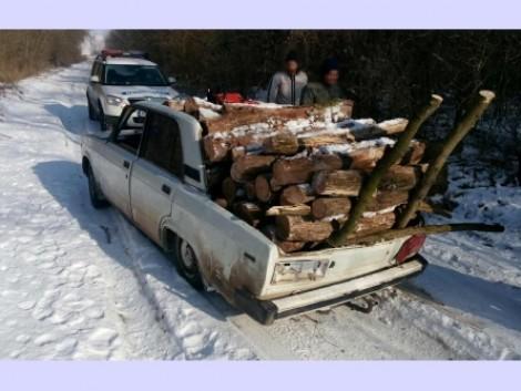 Rendszám nélküli autóval lopták a fát
