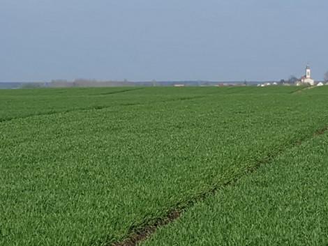 Nufarm növényvédelmi megoldások 2017-ben