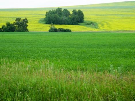 Idén változnak a termeléshez kötött támogatások és a zöldítés is