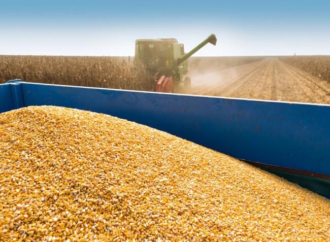 Körkérdés: mennyit adnak idén a búzáért és a kukoricáért?