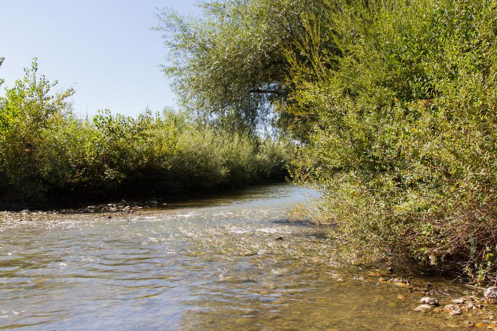 ... időszakban biztosítják a vizet a növényeknek - fejtette ki Siposs  Viktória 7640afc84a