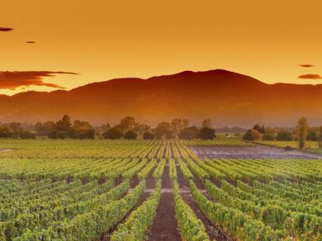 Izgalmas feltörekvő vállalkozások a Globális Agri-Tech Demónapon