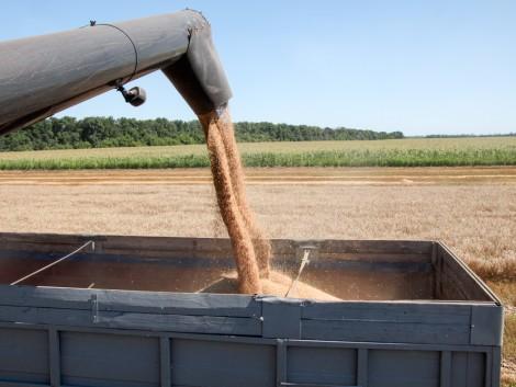 Az Európai Parlament nem kér az ukrán gabonából