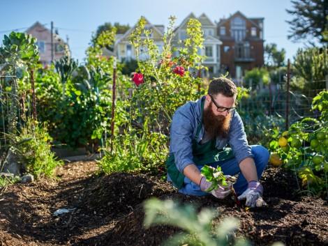 A klímaváltozás miatt is terjed a városi mezőgazdaság
