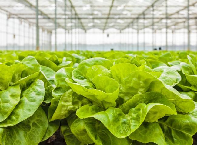 A termesztés sikere szempontjából kulcsfontosságú a megfelelő páratartalom