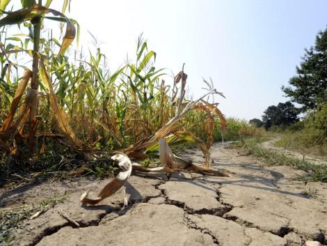A klímaváltozás jelentősen megnehezíti a világ élelmiszer-ellátását