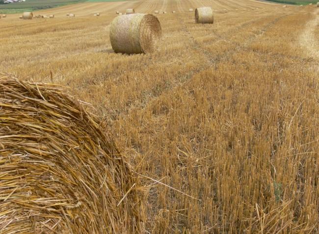 A mezőgazdasági hulladék igazi aranybánya lehet