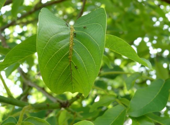 Növényvédelmi előrejelzés: Támadásban a rovarok!