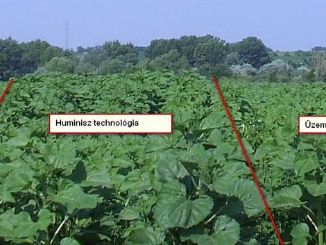 Így növelheti a termés mennyiségét és minőségét akár 15 %-kal