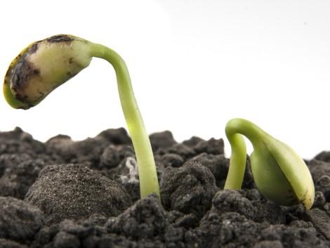 Egyre fontosabbá válik a nagy ellenálló képességű növényfajták nemesítése
