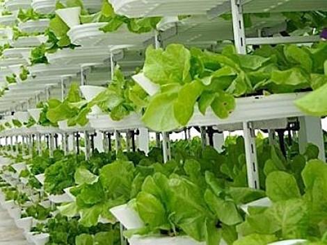 Megépül Európa első, árusítással egybekapcsolt függőleges farmja