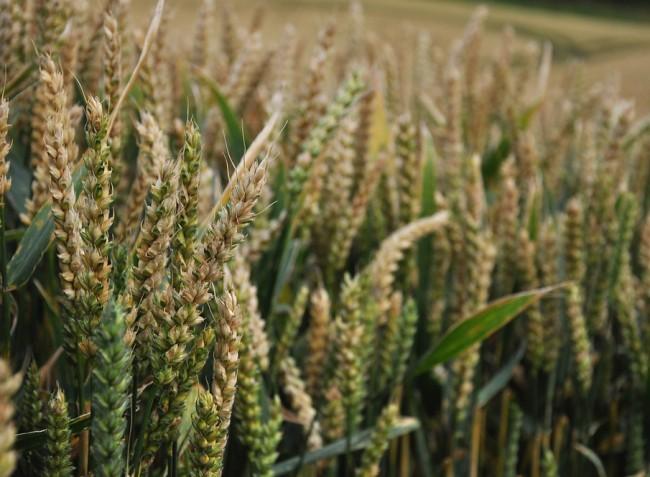 Az időjárás javíthat a terményárakon