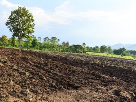 Folyamatosan csökken a magyar talajok termőképessége