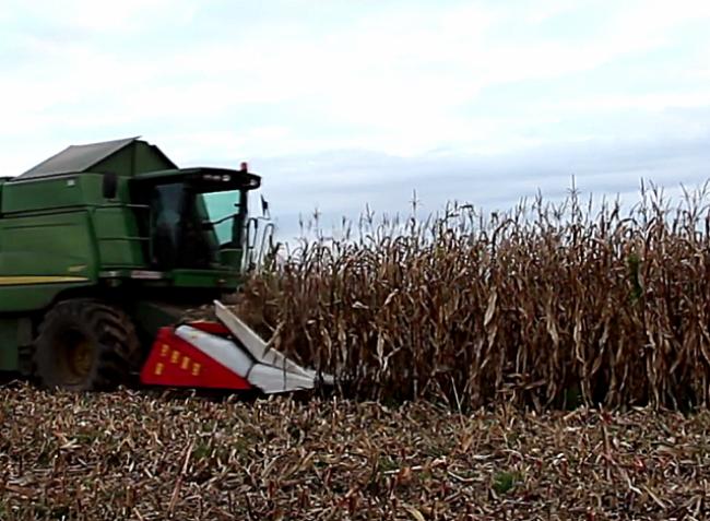 Syngenta Batanga: Még nagyobb kukoricahozam, kedvezőtlen adottságú területen is! (+Videó!)