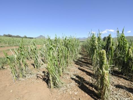 Az időjárás és a munkaerőhiány a mezőgazdaság legnagyobb ellenségei