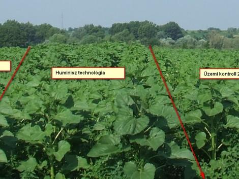 Akár aszályos évben is növelheti a termésmennyiséget