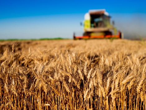 Van még hova fejlődniük a hazai agrárcégeknek