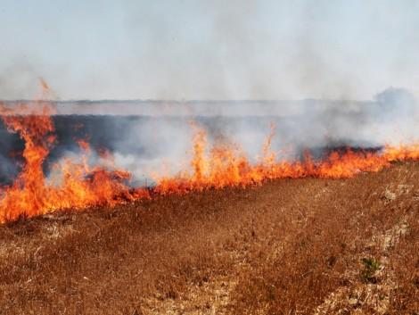 Rengeteg terményt és trágyát pusztított el a tűz