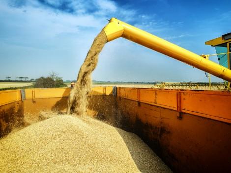 Minden eddiginél nagyobb gabonatermést vár Oroszország