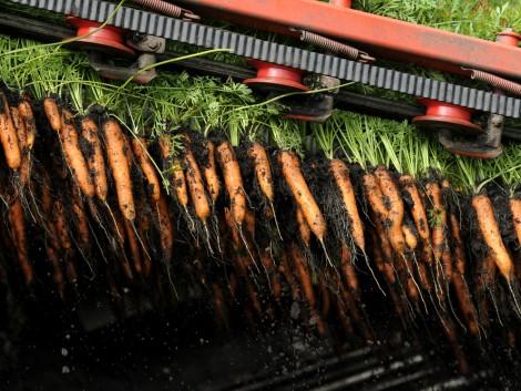Mi lehet a megoldás a zöldségágazat munkaerő-problémáira?