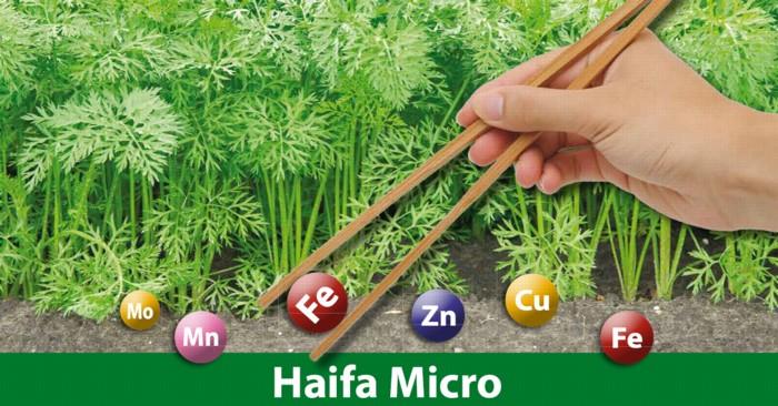 Haifa Micro