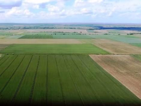 Mitől kaptak a gazdák kiemelkedő gabona-termésátlagokat? (+Videó!)