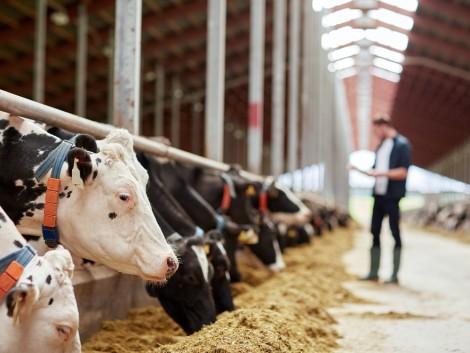 Szupermodern tejtermelő üzemet építenek Besztercebánya mellett