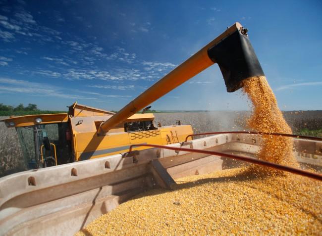 Többletek mindenütt – ne várjuk a terményárak emelkedését. Sőt…