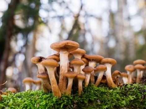 Tuskógomba-rejtély: Leleplezték az erdőgazdálkodók