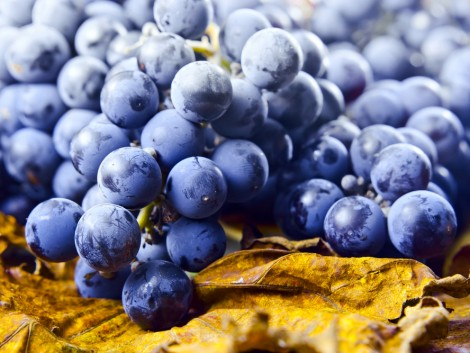 Hat évtizedes mélyponton a világ bortermelése