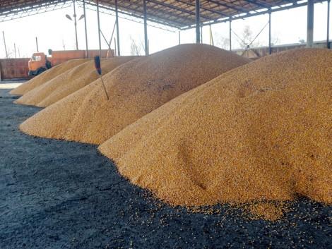 A globális gabonafelhasználás történelmi csúcsra emelkedhet