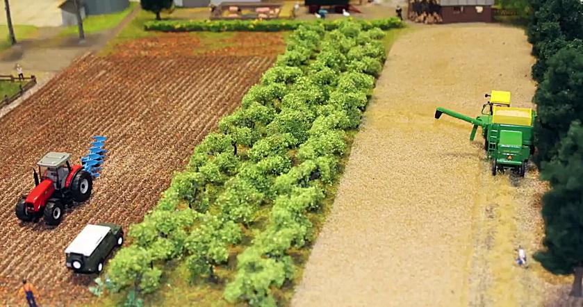 agrár-erdészet