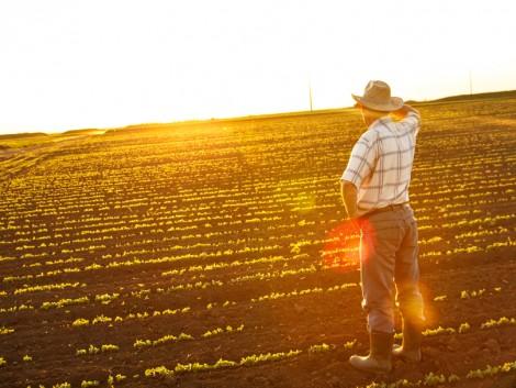 Az árcsökkenés és az erős konkurencia miatt lehangoltak a gazdák az EU-ban