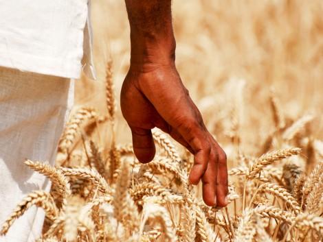 Az Afrikába irányuló agrárexport több kárt okozhat, mint hasznot