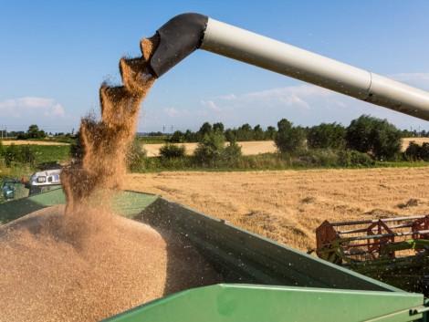 Ezek az országok az EU legnagyobb gabonatermelői