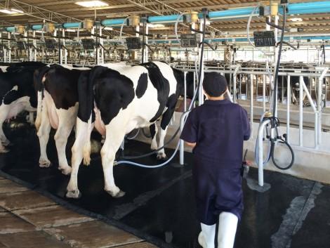 A kereskedők a termelőket hibáztatják az agrárválságok kialakulásáért