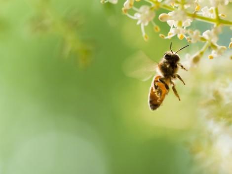 A méhek védelmében