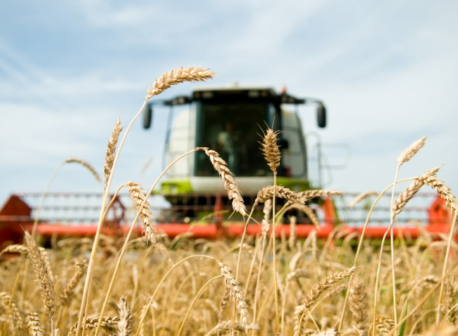 A hazai termelők is megtalálhatják a kitörési pontokat
