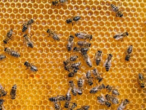 Támogatás igényelhető méhészeti járművekre!