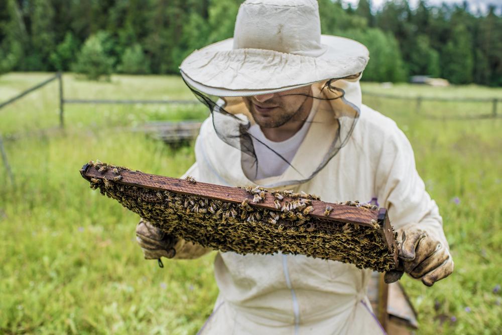 Újraszabályozza az állam a méhészkedést